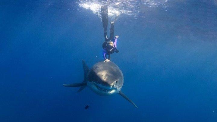 Бесстрашная покорительница акул Оушен Рамси