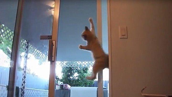 Самые популярные видео с кошками