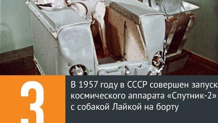 3 ноября 1957 года - Запущен второй искусственный спутник с собакой на борту