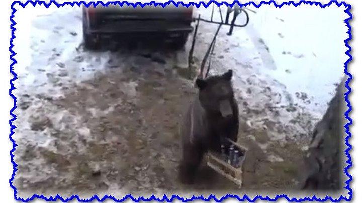 Медведь украл ящик водки
