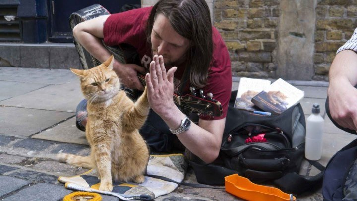 Уличный кот по кличке Боб (2016) Драма, Комедия, Семейный