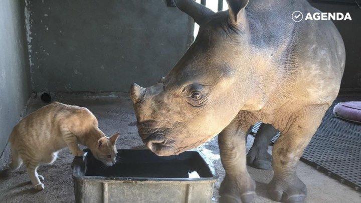 Дружба маленького носорога и кота