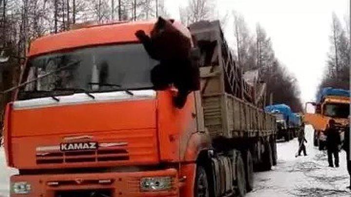 Якутские медведи