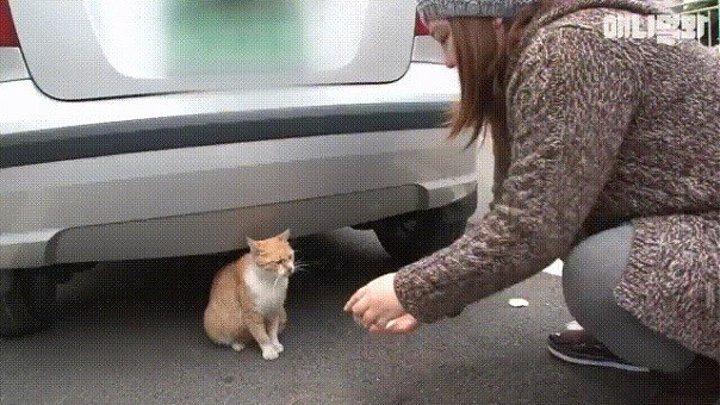 Заботливая кошка