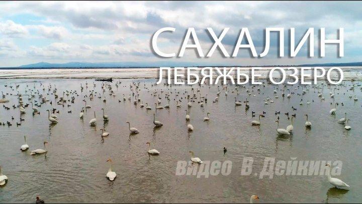 Лебяжье озеро весной. Сахалин