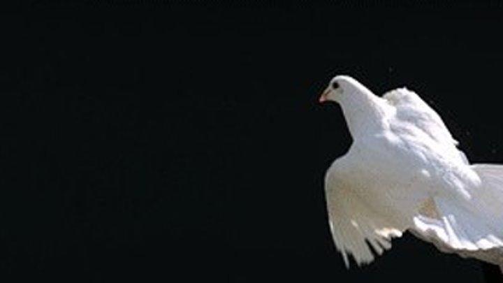 Я играю не зная нот... Последняя песня птиц... Автор и исполнитель - Рамиль Ахмедов...
