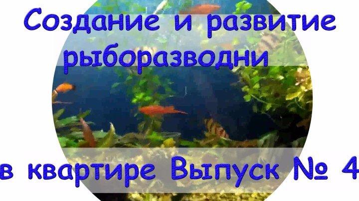 Создание и развитие рыборазводни в квартире Выпуск №4