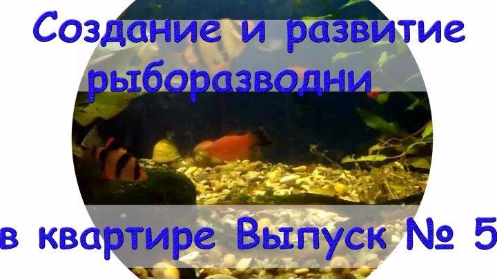 Создание и развитие рыборазводни в квартире Выпуск №5 Последствия отпуска