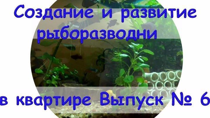 Создание и развитие рыборазводни в квартире Выпуск №6