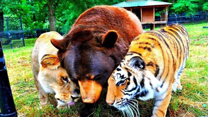 Удивительная дружба в мире природы!