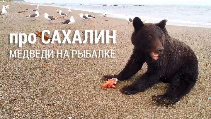 Медведи на рыбалке. Сахалин