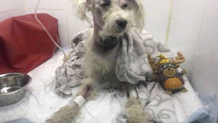 Мужчина душил собственную собаку за то, что она укусила его сына