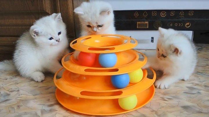 Детки играют в игрушку
