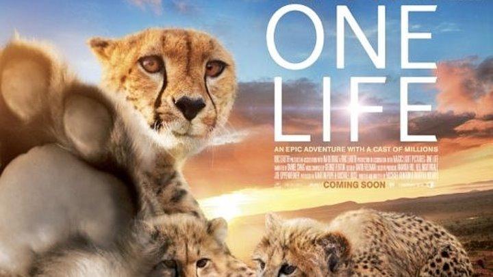 Одна ЖИЗНЬ 2011 ( Full HD 1080p, Лучший документальный фильм про животных).