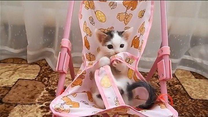 Брошенный котенок теперь - наш любимец! Забавный котенок Артик!