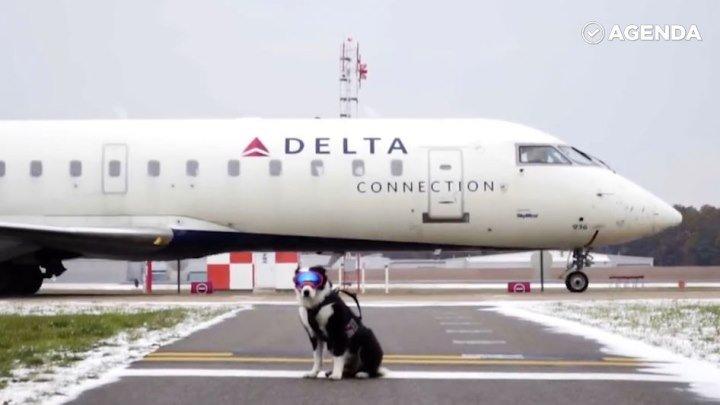 Собака с важной миссией