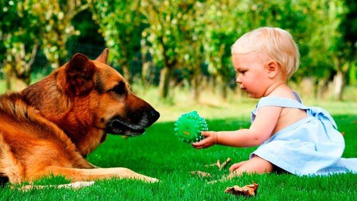 Дети и собаки - лучшие друзья ))