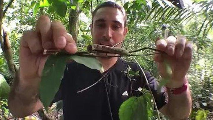 Гусеница, которая превращается в змею при опасности