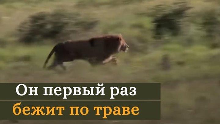 Эмоции животных, которые вышли на свободу из цирка!