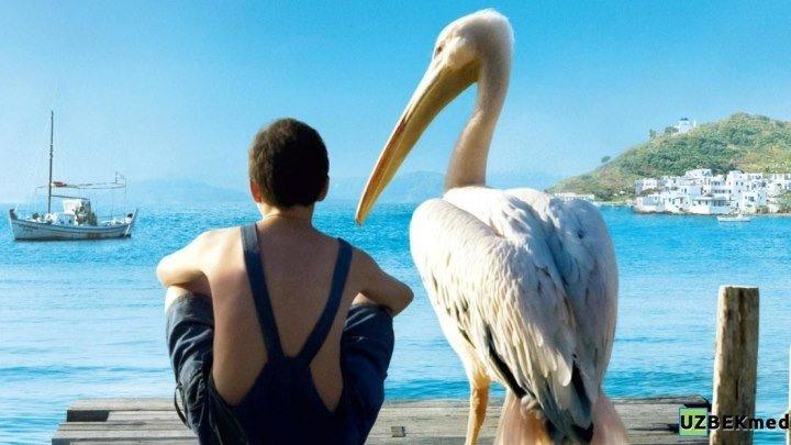 Пеликан (2011) семейный драма