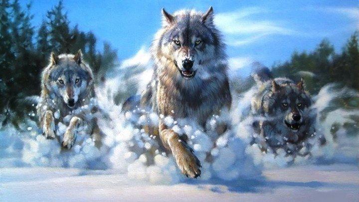Волчья правда