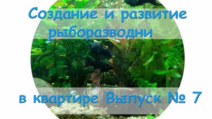 Создание и развитие рыборазводни в квартире Выпуск № 7
