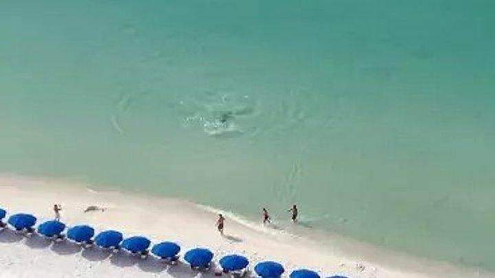 Охота акулы у пляжа