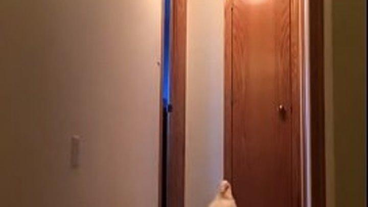 Попугай какаду ищет Наташу в коридоре | Наташа ты где?