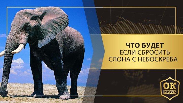 Что будет, если сбросить слона с небоскреба?