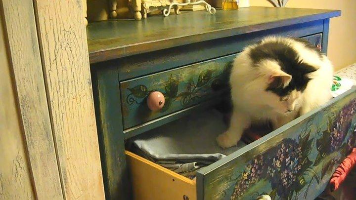 """Кот Митя. Банда """"Черная кошка"""""""