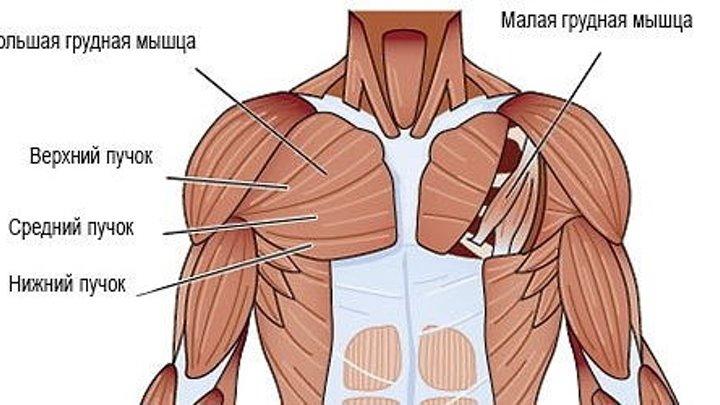 СТРЕТЧИНГ(растяжка) мышц груди. Как растягивать малую грудную мышцу?