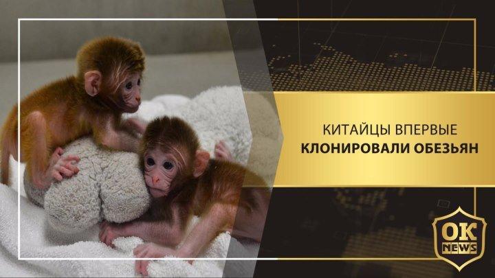 Китайцы впервые клонировали обезьян