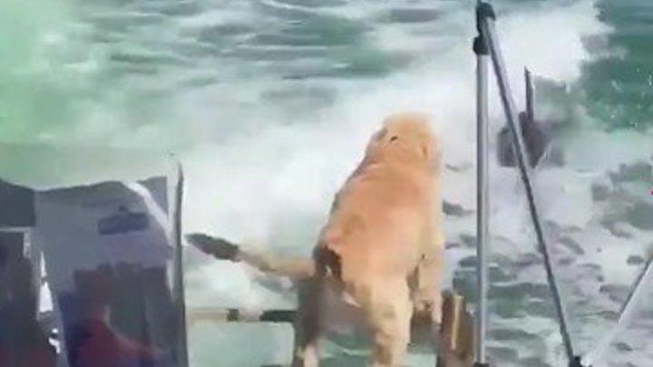 Дельфины дразнят собаку!