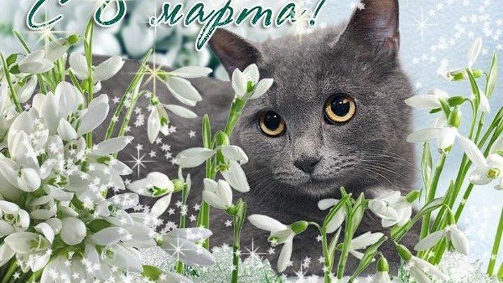 С 8 марта открытка с кошкой, пожелания картинках