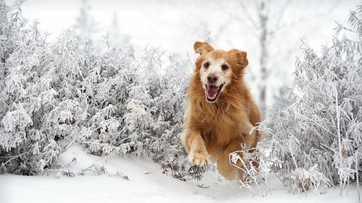 Снежное погружение. Позитив! )
