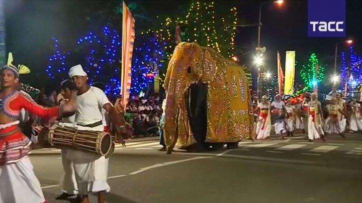 Парад слонов в Шри-Ланке