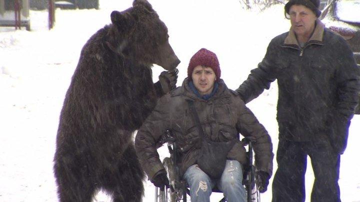 Лапа помощи: дрессировщика в инвалидном кресле возит по Москве медведь