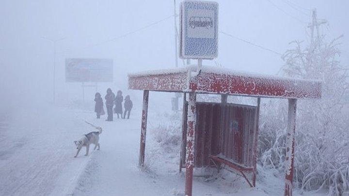 Au inghetat din mers. Mai multe animale au murit, in Kazahstan, dupa ce termometrele au inregistrat -56 grade Celsius