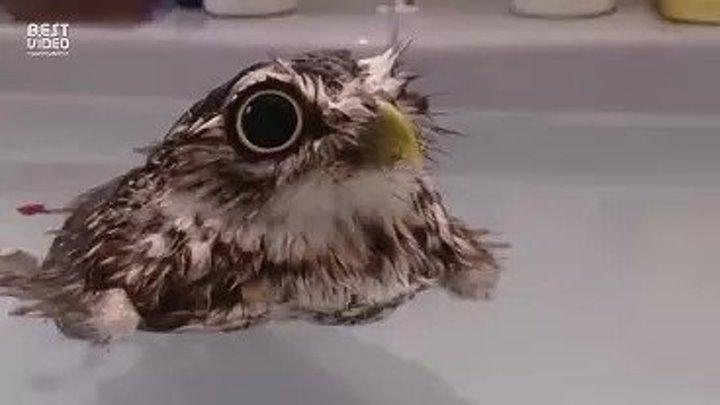 Милашные совы