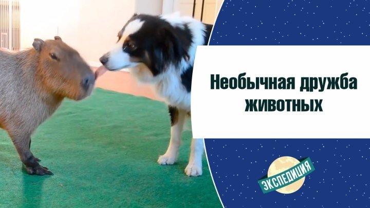 Необычная дружба животных [Экспедиция]
