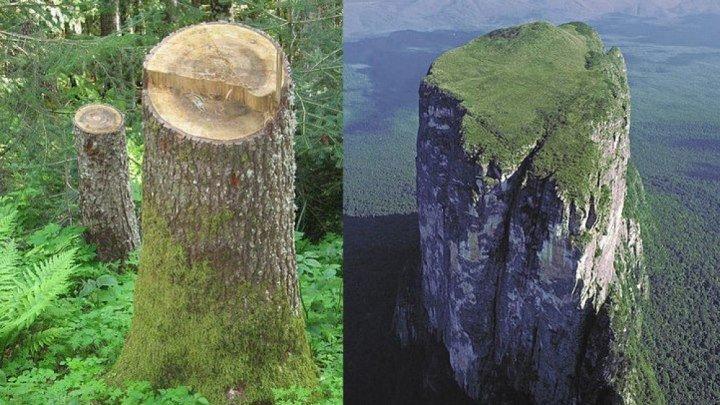Исполинские леса прошлого. Жатва-это переход.