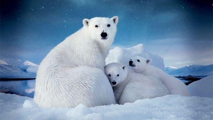 Дикая Россия: Арктика 2009 документальный природа животные