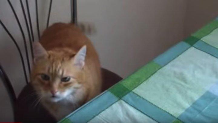 Рыжий Кот ворует сало