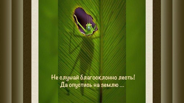 Не слушай лесть! Христианские стихи « Я нашёл, что искал …» #ЕвгенийКрыгин (2)