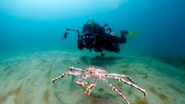 Подводный мир. Баренцево Море.