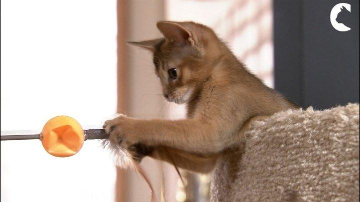 Молодость кошки на долгие годы. Совместные игры - один из элементов формулы молодости Feed.Move.Play.