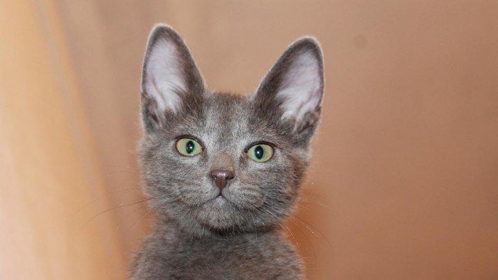 Приколы с кошками , смешные животные видео 16