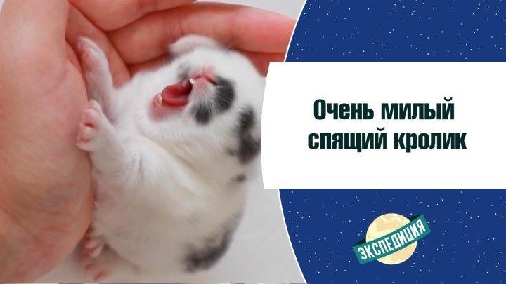 Очень милый спящий кролик [Экспедиция]