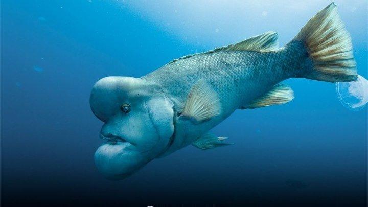 Океаны: 2009