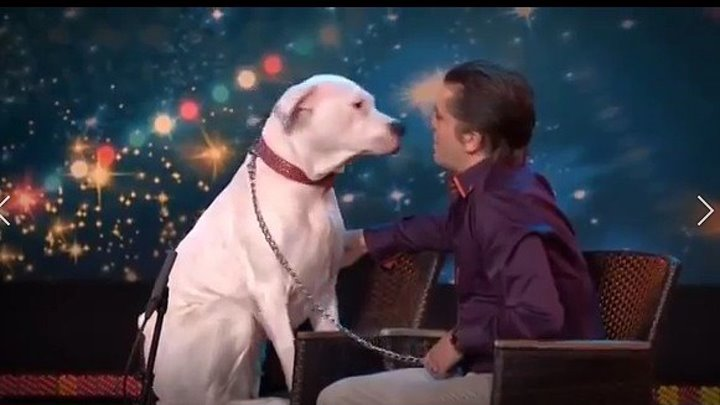 Собака поет песню Уитни Хьюстон.